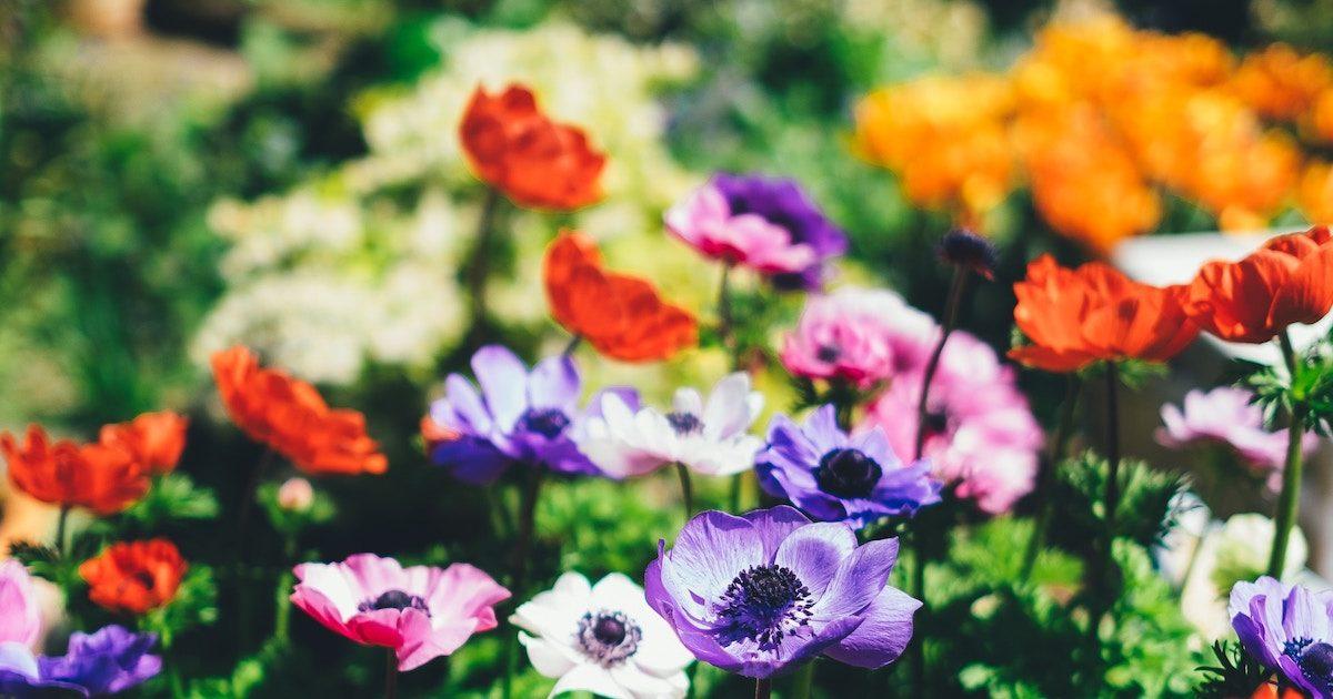 Gardens – Thursday, June 13th, 2019
